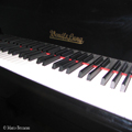 Piano Keyboard WL